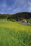 Alpine village spring flowers and grass in Alpine meadow, Imst district, Austria.