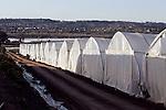Herb Thyme Farms