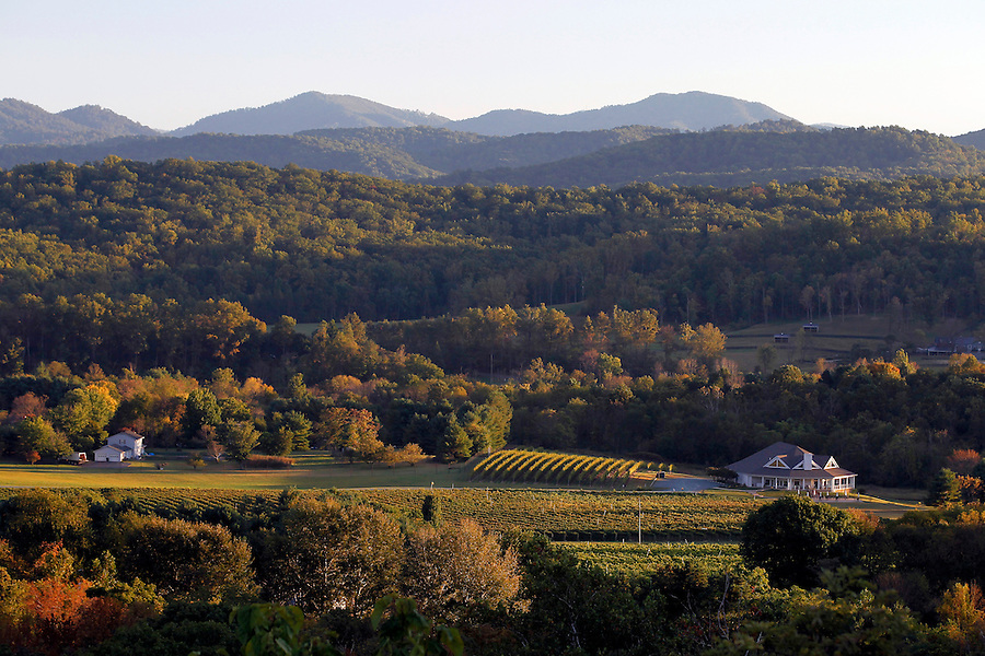 A scenic view of a vineyard Albemarle County,  Virginia taken from the Blue Ridge Parkway. Photo/Andrew Shurtleff