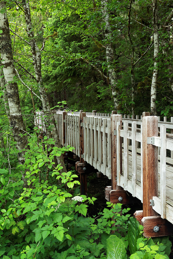 Raised wildlife viewing boardwalk trail, Starrigavan Recreation Area, Sitka, Alaska, USA