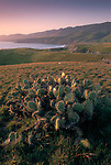 Sunset over cactus and green grass hills over the Pacific Ocean on the West end of Santa Cruz Island, Channel Islands, California Coast