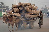 An ox cart laden with an incredibly heavy load of hardwood logs crawls through the traffic on the Circular Road in Lahore.