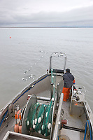 Commercial fisherman Bill Webber during a 12 hour sockeye and king salmon opener on the Copper River Delta, southcentral, Alaska.