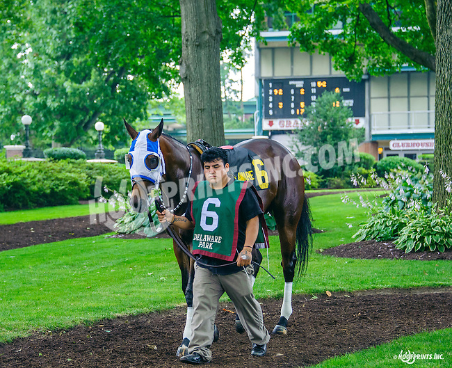 Disco Chick before The Dashing Beauty Stakes at Delaware Park on 7/9/16