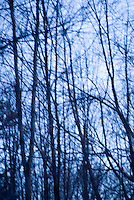 AVAILABLE FOR LICENSING FROM GETTY IMAGES. Please go to www.gettyimages.com and search for image # 132444994.<br />