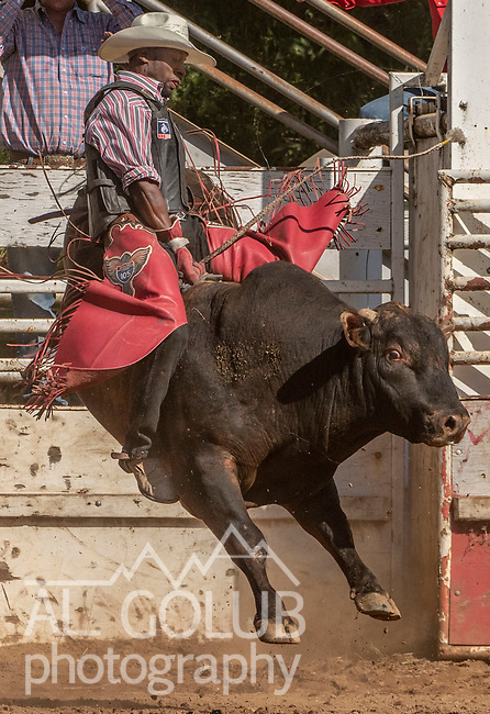 Bull Rider Christopher Byrd from Compton, California at the 62nd annual Mother Lode Round-up on Sunday, May 12, 2019 in Sonora, California.  Photo by Al Golub