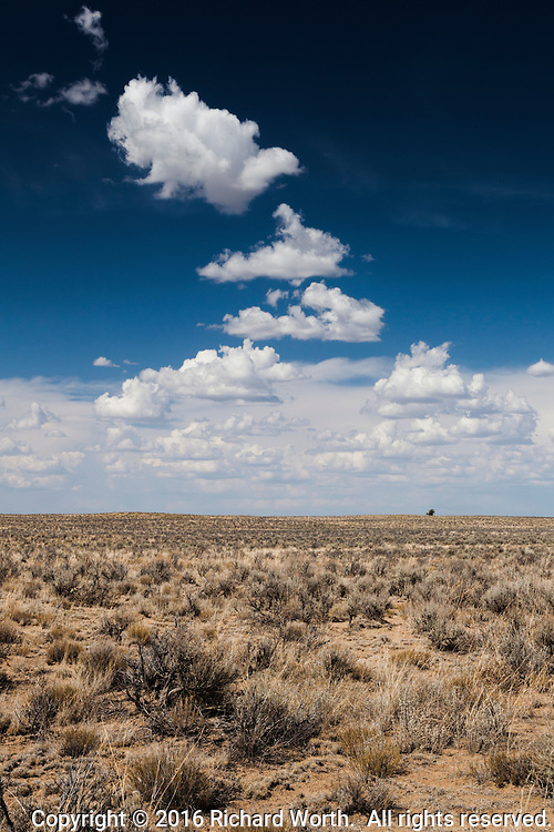 One green tree breaks the horizon while sage and weathered juniper fill a foreground under a sky of blue and fluffy clouds.