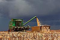 Colheita mecanizada de milho em Sao Gabriel do Oeste. Mato Grosso do Sul. 2011. Foto de Antonio Costa.