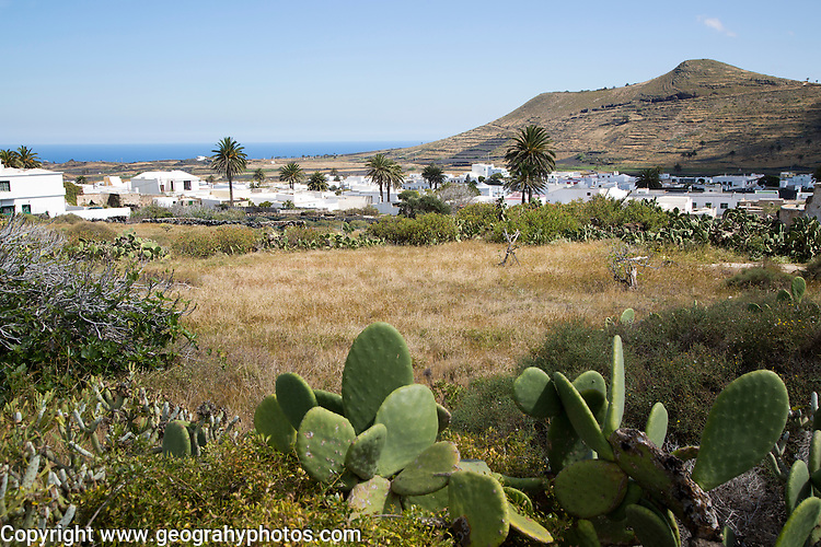 View over cactus plants and whitewashed houses, village of Maguez, Lanzarote, Canary Islands, Spain