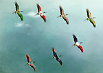 Illustrative image of birds flying in sky representing global business