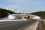 Wildlife overpass  in Banff National Park, Alberta, Canada