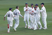 Peter Siddle of Essex celebrates with his team mates after taking the wicket of Gary Ballance during Essex CCC vs Yorkshire CCC, Specsavers County Championship Division 1 Cricket at The Cloudfm County Ground on 8th July 2019