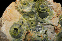 Wavellite, a hydrated aluminum phosphate hydroxide mineral, appearing in its well known greenish spherical or radial crystal form. Dug Hill, Avant, Garland County, Arkansas