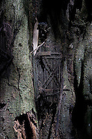 babys are buried in holes in holy trees, Toraja land, Sulawesi, Indonesia. The little doors covering the hole in the trees, where the babies are buried, are made of hairy palm strings, symbolizing  the hair of the mother. Babies are spirits coming from nature, from the trees, so returning back to the trees. When the hole in the tree is closing in the following years, the spirit of the baby has sucessfully returned to spiritual world and is  strong enough to help the family after its death  as a spirit