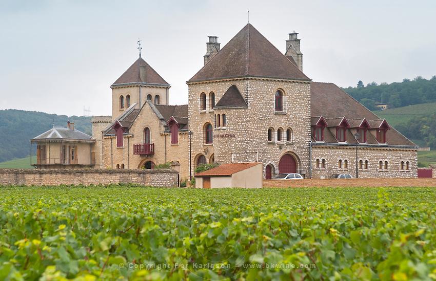 Vineyard. Domaine de la Tour, Clos de Vougeot. Cote de Nuits, d'Or, Burgundy, France