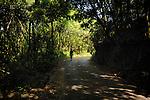 Walking along narrow road through the Laura forest, Parque nacional de Garajonay, La Gomera, Canary Islands, Spain