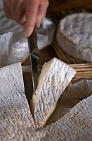 Europe/France/Ile-de-France/51/Marne/Escardes: dégustation de Brie de Meaux, de Brie de Melun et de Coulommiers chez Mr et Mme Guillemot fermiers