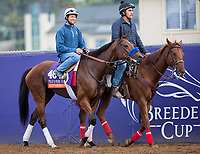 DEL MAR, CA - NOVEMBER 02: Goodyearforroses, owned by Abbondanza Racing LLC & Medallion Racing and trained by Richard Baltas, exercises in preparation for Breeders' Cup Filly & Mare Turf at Del Mar Thoroughbred Club on November 2, 2017 in Del Mar, California. (Photo by Kazushi Ishida/Eclipse Sportswire/Breeders Cup)