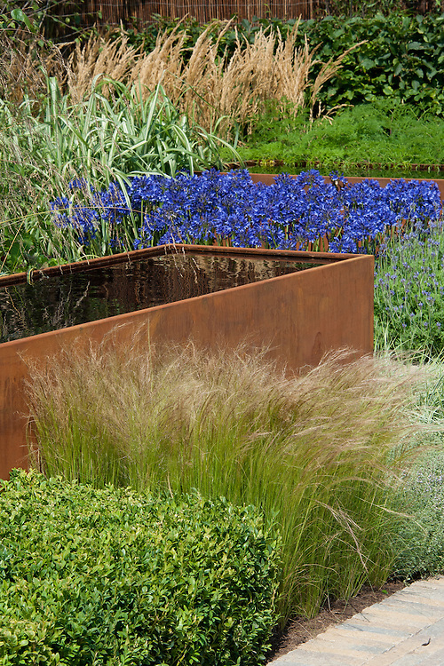 Rusted steel water trough surrounded by blue Agapanthus, Box, Stipa tenuissima and Lavender. Vestra Wealth's Gray's Garden, designed by Paul Martin, Hampton Court Flower Show 2011.