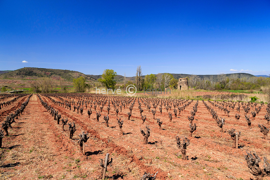 France, Hérault (34), Salasc, vignoble // France, Herault, Salasc, vineyard