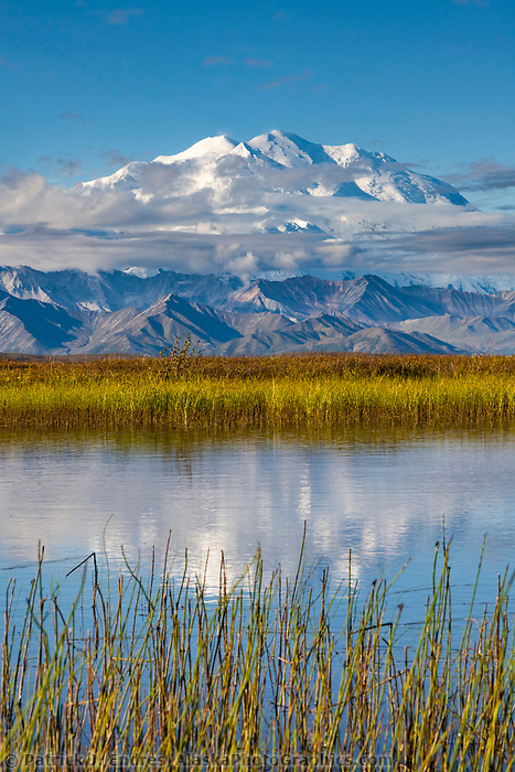Summit Of Mt. Denali, North America's Largest Mountain, Reflects In A Small Tundra Pond Called Reflection Pond, Denali National Park, Interior, Alaska.