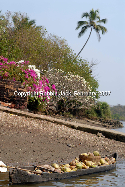 Dugout canoe filled with coconuts at the old ferry landing stage at Chopdem on the Chapora River in Goa in India.