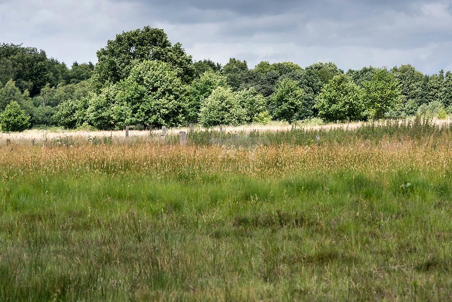 Grasland langs Oosteindeseweg, Pannenhoef