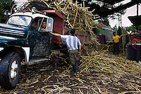 A truck fully loaded by harvested sugar cane seen in front of a rural sugar cane mill (trapiche) in San Agustín, Colombia, 18 April 2004. Panela, a solid block of raw, unrefined sugar, is made by cooking and evaporation of the sugar cane juice into a golden, sticky syrup which is then poured into the wooden molds and allowed to solidify. Having the taste like a cross between molasses and brown sugar, panela is served as a hot or cold infusion (aguapanela). Due to the large amounts of proteins, vitamins and minerals and thus, panela is believed to have healing powers. Cheaper than sugar, it is consumed by the majority of Colombians and it is a major source of calories for children from families with low socioeconomic status. With more than 70,000 farms that cultivate sugarcane for mills, panela production is an important economic activity in the Colombian countryside, employing around 350,000 people and being the second largest source of jobs after agricultural coffee production.