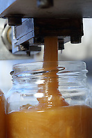 Bottling of honey in a modern honey house.///Mise en pot du miel dans une miellerie moderne par l'apiculteur Stephane Lebrero.