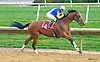 Indian Red winning at Delaware Park on 10/17/15