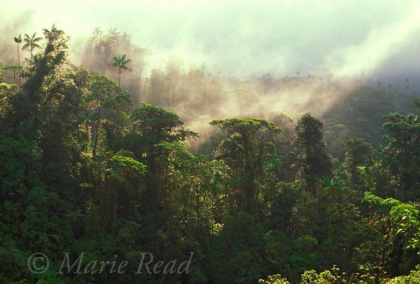 Cloud Forest, La Fortuna Forest Reserve, Chiriqui province, Panama.<br /> Slide # SP3-08