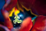A succulent floral abstract swirling deep into the sacred feminine.