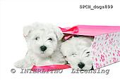Xavier, ANIMALS, dogs, photos+++++,SPCHDOGS899,#a# Hunde, perros