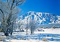 Winter Cold Landscape - Bishop, Ca
