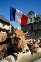 Europe/France/Auvergne/12/Aveyron/Saint-Come d'Olt: Arrêt du troupeau à la fontaine du village lors de la transhumance en Aubrac