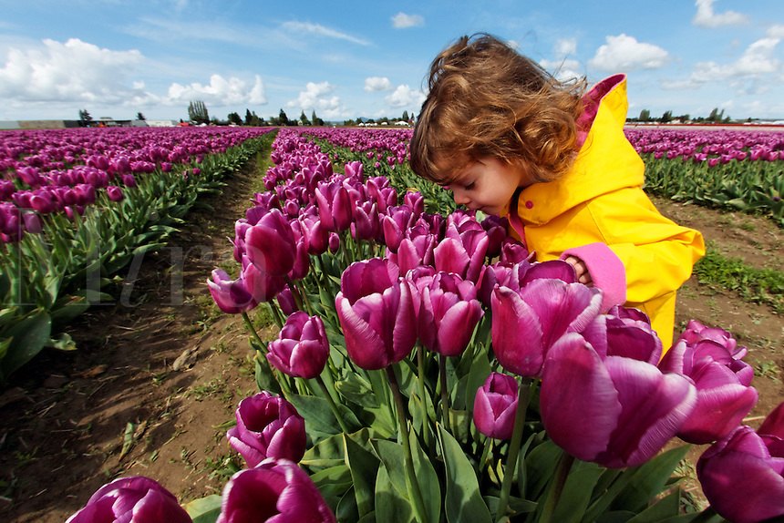 Girl standing in field of purple tulips smelling flowers, Skagit Valley, Mount Vernon, Washington, USA