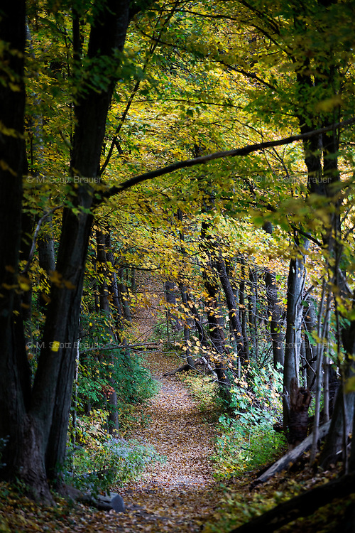 Autumn leaves have fallen onto a walking trail in Amherst, Massachusetts, USA.