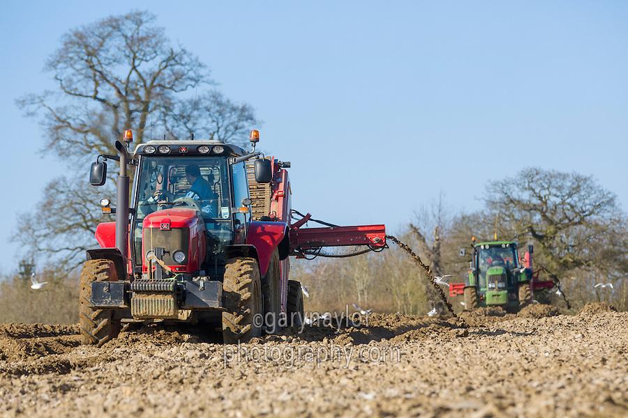 De-stoning potato seed bed with Grimme CS 150 combi star & John Deere tractor - Norfolk, March