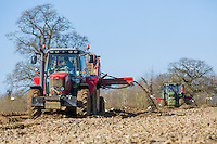 De-stoning potato seed bed with Grimme CS 150 combi star & John Deere tractor - Norfolk, March