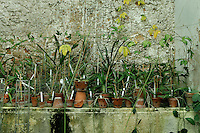 Incubators, restored 1995-97, Paul Chemetov and Borja Huidobro, Jardin des Plantes, Museum National d'Histoire Naturelle, Paris, France. General view of seedlings in pots against a wall.