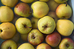 Apples in water close up