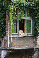 Belgique, Bruges, Chien à la fenêtre, long du canal Groenerei (Canal vert) , on retrouve ce chien dans le film : Bons Baisers de Bruges  // Belgium, Bruges,  Groenerei Canal, (Green Canal)  Dog in the window, along the Groenerei channel (green channel),   this dog is  in the movie In Bruges
