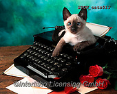 Xavier, ANIMALS, REALISTISCHE TIERE, ANIMALES REALISTICOS, cats, photos+++++,SPCHCATS913,#a#, EVERYDAY