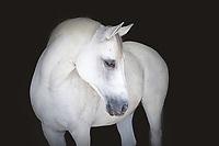 Joli Cheval | Equine Portraiture