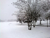 Snowy park with trees