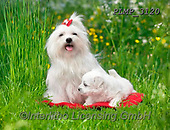 Marek, ANIMALS, REALISTISCHE TIERE, ANIMALES REALISTICOS, dogs, photos+++++,PLMP3120,#a#, EVERYDAY