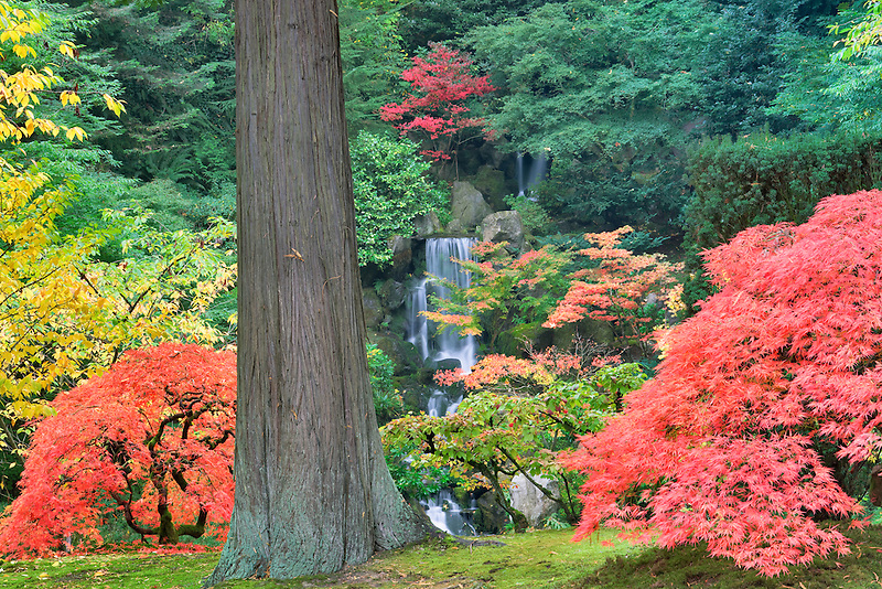 Waterfalls and fall color at Portland Japanese Gardens. Oregon