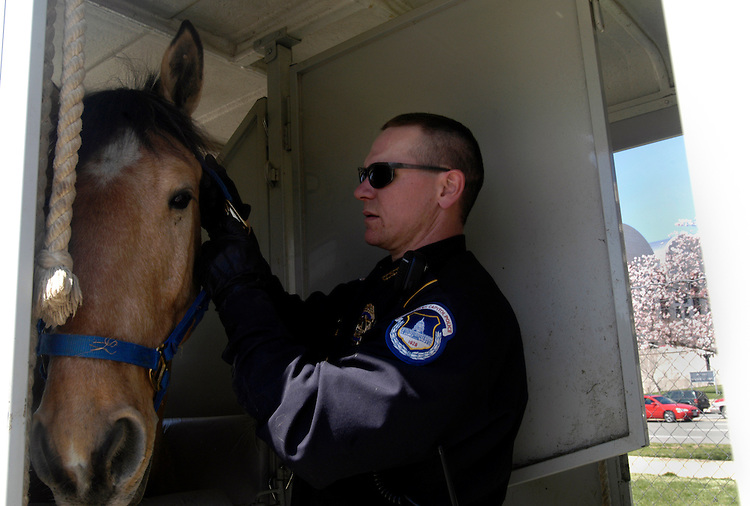 Mounted U.S. Capitol Police Officer John White loads up his horse Tribute near the West Front of the Capitol.
