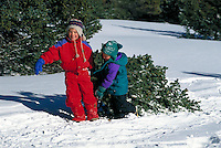 Cutting a Christmas Tree and Pulling it Through the Snow, Winter, Boys, Family, Holiday, Xmas, Colorado United States Rocky Mountains, Summit County.