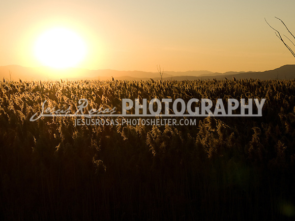 Sunset in Utah Lake